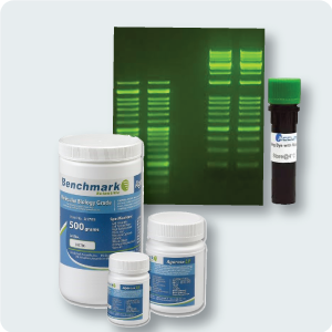 PCR-Reagents_Product_Image